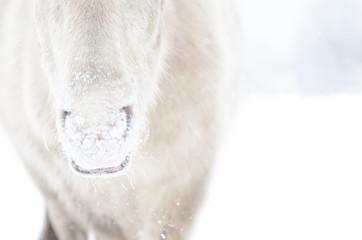 CloseUp Maul Pony im Schnee