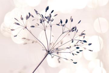 Samen von wilder Pflanze mit hellem Hintergrund und weichem Effekt stille und reine Stimmung Winter