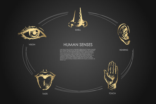 Human senses - vision, taste, touch, hearing, smell vector concept set