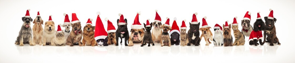 large group of christmas pets with santa hats