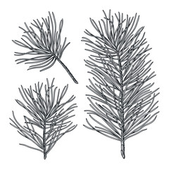 Set of cedar hand drawn branches, engraved botanical decor. Vector fir tree sketch isolated on white background