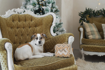 Beautiful puppy posing near a Christmas tree, holiday concept