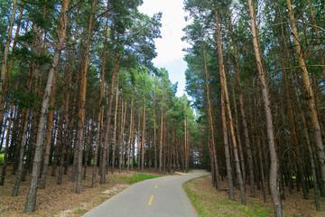 Pathway running through forest