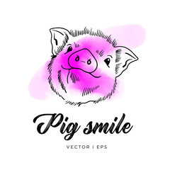 Hand drawn vector pig cute face. Piglet outline simple drawing, pink watercolors splash.