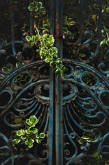 closed rusted ornament old iron gate overgrown with wild bush