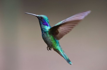 Fauna macro image