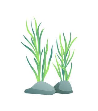 Marine or Decorative Aquarium Algae Illustration