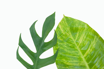flat lay of Green leaves isolated on white background