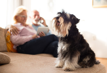 Senior couple with dog at home