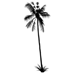 The Black Palm silhouette. Exotic Tropical tree.