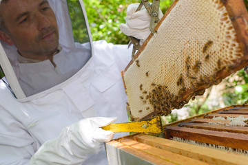 beekeeping in the yard