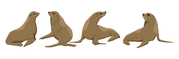 Set of fur seals. Males and females. Pinnipeds. Vector object isolated on white background.