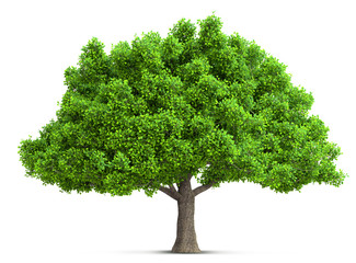 tree isolated 3D illustration