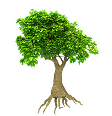 tree isolated with roots and leaves