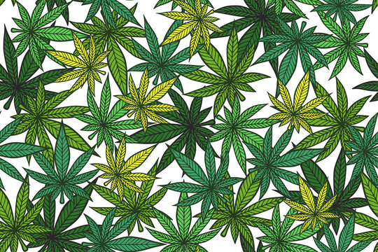 Cannabis color pattern