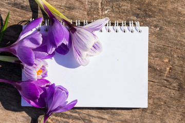 Purple crocus flowers and blank notepad  on rustic wooden background