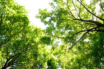Green tree tops