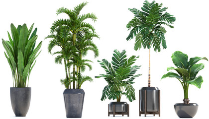Poster Palmier Collection Exotic plants in a pot on a white background