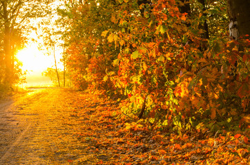 Autumn sunset. Fall scene. Warm autumn forest in sunset light.