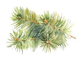 Watercolor pine tree branches on the white background.