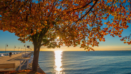 Beautiful autumn tree branches during sunrise at the sea. Gdynia, Poland.