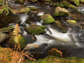 Hamersky stream at Sumava in the fall. Autumn colors on Hamersky creek. Sumava Southern Bohemia. Colorful autumn on Sumava. Bavarian Forest. Czech Republic