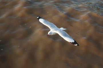 top view flying seagulls in ocean