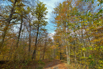 Colorful stunning autumn forest landscape in October.