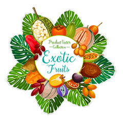 Exotic and tropical fruits. Vector food and drink