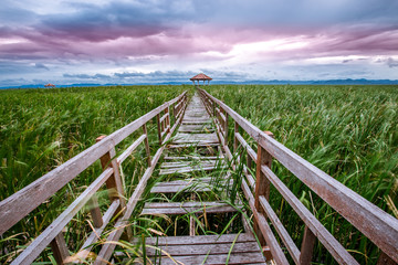 Backgrounds of green pastures, high mountains, large surrounds, natural wallpapers close. There is a long wooden bridge overlooking the surrounding scenery.
