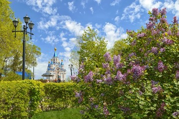 Lilac blossom in the city. Khabarovsk, far East, Russia .