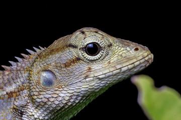 Marco chameleon isolated on background black beautiful
