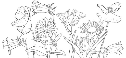 vector drawing poppy flowers