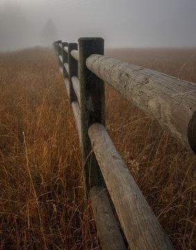 Foggy Fenceline