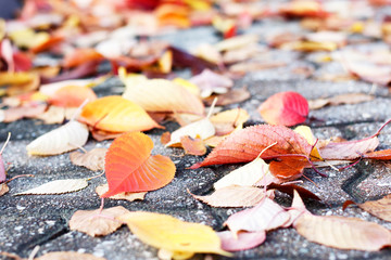 Colorful autumn leaves on the pavement, autumn background