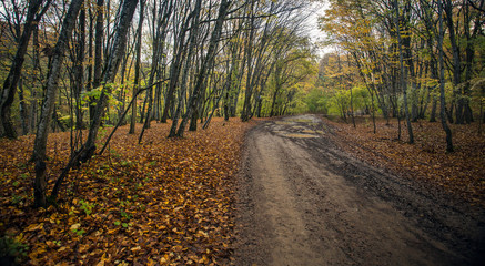 The concept of autumn. A long-distance Dirt road after a rain in the autumn forest covered with fallen yellow leaves