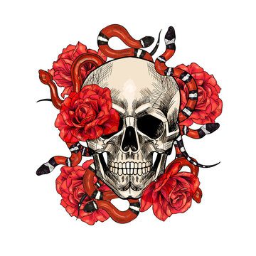 Skulls with snakes and roses. Hand drawn. Vintage style