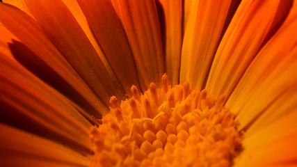 Yellow petal closeup