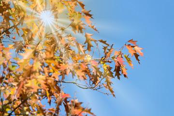 Ein Baum mit gelblichen Blättern im Herbst