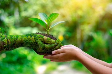 environment Earth Day In the hands of trees growing seedlings. Bokeh green Background Female hand...