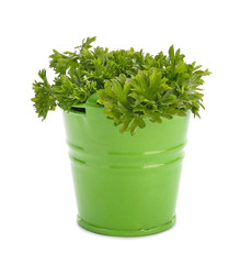 Bucket with fresh aromatic parsley on white background