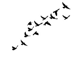 isolated silhouette of flying birds