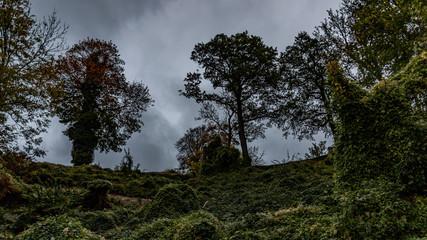 Bäume in der Dämmerung am Abhang