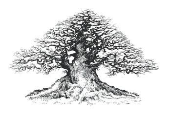 Old tree, drawing bonsai .
