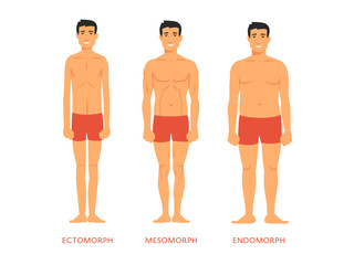 Human body types. Men as endomorph, ectomorph and mesomorph.