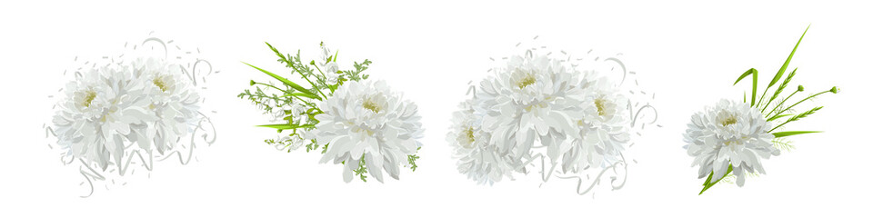 Chrysanthemums. Floral compositions with flowers, leaves.