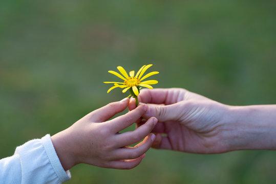黄色い花を手渡す親子