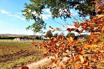 Herbstlandschaft - Wald - Acker - Laub