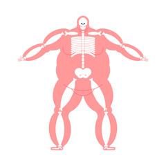 Fat body Anatomy skeleton. Wide bone. Fat Man Skeletal system Vector Illustration