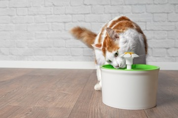 Foto op Plexiglas Kat Thirsty longhair cat drinking water from a pet drinking fountain.